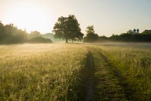 Morning atmosphere, Mozart Oak, Seeon, Chiemgau, Upperの写真素材 [FYI02338094]