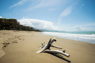 Driftwood, natural beach in Albarese, Natural Park ofの写真素材 [FYI02338100]