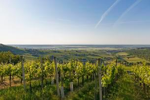 Eisenberg vineyard, Eisenberg an der Pinka, quaint wineの写真素材 [FYI02338118]