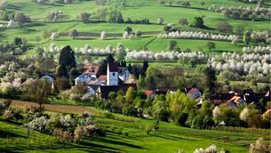 Townscape, during the cherry blossom season, Obereggenenの写真素材 [FYI02338194]