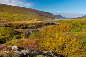 Autumnal foliage, near Lagarfljot Lake, also Logurinnの写真素材 [FYI02338264]