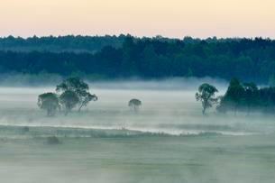 Landscape in morning mist, Biebrza National Park, Podlaskieの写真素材 [FYI02338404]