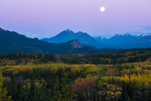 Autumnal landscape, Denali National Park, Alaska, Unitedの写真素材 [FYI02338464]