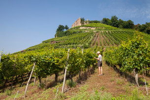 Woman in the vineyard, Staufen castle ruins on theの写真素材 [FYI02338626]