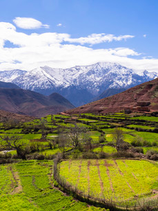 View of the Atlas Mountains, Ourika Valley, Atlasの写真素材 [FYI02338886]