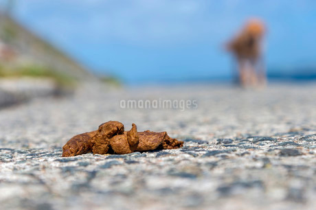 Dog feces on a footpath with dog behind, Mouseholeの写真素材 [FYI02339004]