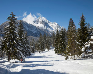 Track through snowy pine forest, Wetterstein Mountainsの写真素材 [FYI02339043]