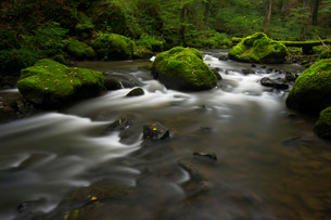 Stream, Strohner Schweiz, Daun, Vulkaneifelの写真素材 [FYI02339155]