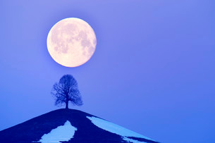 Lime Tree (Tilia) on a moraine hill at full moon, Canton ofの写真素材 [FYI02339214]