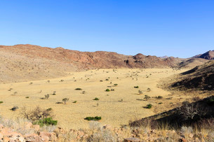 Tributary valley of the Swakop River, dry river, Tsaobisの写真素材 [FYI02339251]