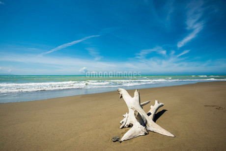 Driftwood, natural beach in Albarese, Natural Park ofの写真素材 [FYI02339325]