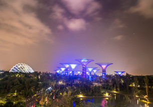 Illuminated SuperTrees at night, Gardens by the Bayの写真素材 [FYI02339384]