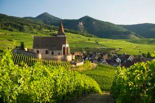 Church within the vineyards, Gothic fortified church ofの写真素材 [FYI02339447]