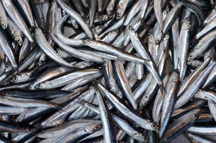 Sardines (Sardina pilchardus) at the fish market, Corfuの写真素材 [FYI02339514]