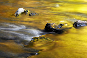 Stones in the riverbed, Wutachschlucht gorge, Black Forestの写真素材 [FYI02339518]
