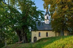 Gothic chapel of St. George, old lime tree in vineyardsの写真素材 [FYI02339526]