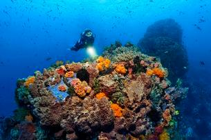 Diver views Coral colony, fish, feather star, soft coralの写真素材 [FYI02339532]