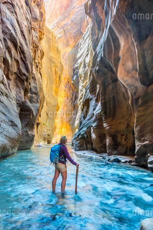 Hiker standing in river, Zion Narrows, narrow of the Virginの写真素材 [FYI02339552]