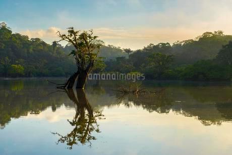 Tree (Macrolobium acaciifolium) reflected in Laguna Grandeの写真素材 [FYI02339554]