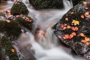 Stream flowing over stones, autumn leaves, Cascadeの写真素材 [FYI02339558]