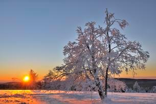 Snow covered trees at sunrise, frost, winter landscapeの写真素材 [FYI02339669]