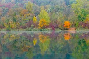 Trees, reflections in water, autumnal colours, Pfuhler Seeの写真素材 [FYI02339708]