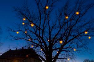Stars shining on bare tree, Christmas decorationの写真素材 [FYI02339741]