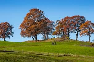 Autumn landscape with beech trees (Fagus) in Bad Tolzの写真素材 [FYI02339756]