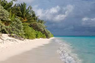 Coastal landscape, Thoddoo island, Indian Ocean, Maldivesの写真素材 [FYI02339762]