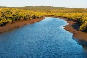 River Wanggoolba Creek, Fraser Island, Queenslandの写真素材 [FYI02339790]