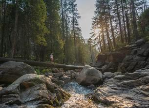 Young man crossing a tree trunk over the Merced River, Mistの写真素材 [FYI02339813]