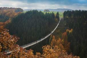 Suspension bridge over Geierlay Morsdorfer Bachtalの写真素材 [FYI02339830]