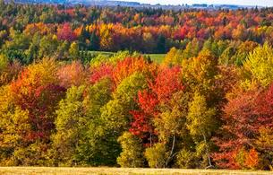 Autumn colours, trees and hayfield, Eastern Townshipsの写真素材 [FYI02339855]