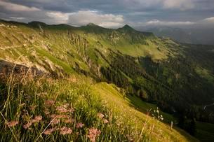 Alpine meadows in summer, Karwendel, stormy atmosphereの写真素材 [FYI02339856]