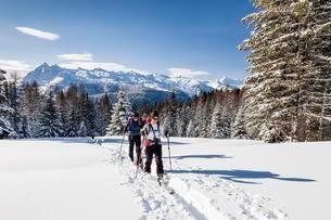 Ski tourers ascending the Cima Bocche at Passo Vallesの写真素材 [FYI02339888]