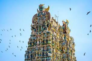 Doves flying around the Sri Meenakshi Sundareshwararの写真素材 [FYI02339898]