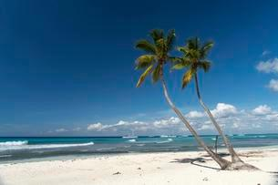 Dream beach, sandy beach with palm trees and turquoise seaの写真素材 [FYI02339937]