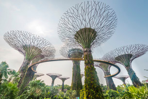 SuperTrees, Gardens by the Bay, Singapore, Asiaの写真素材 [FYI02339952]