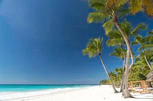 Dream beach, sandy beach with palm trees and turquoise seaの写真素材 [FYI02339961]
