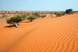 Dunes in the Kalahari, Kalkrand, Namibia, Africaの写真素材 [FYI02339979]
