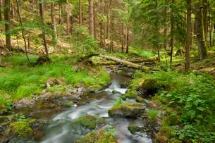 River Vesser, Vessertal-Thuringian Forest biosphereの写真素材 [FYI02340000]