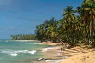 Sandy beach with palm trees in Las Terrenas, Samanaの写真素材 [FYI02340013]