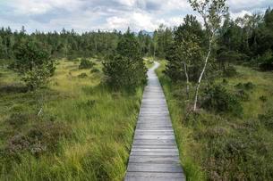 Boardwalk path through the Murnau moor, Murnau, Upperの写真素材 [FYI02340047]
