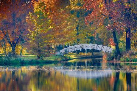 Autumn in Worlitzer Park, UNESCO World Heritage Gardenの写真素材 [FYI02340099]