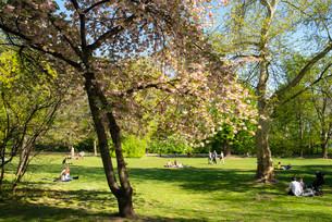 Park on Margaret Island, Budapest, Hungary, Europeの写真素材 [FYI02340116]