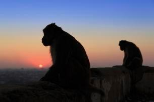 Silhouette of two monkeys sitting on a wall at sunsetの写真素材 [FYI02340139]
