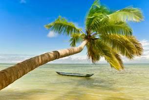 Palm on beach, Indian Ocean, island of Nosy Natoの写真素材 [FYI02340163]