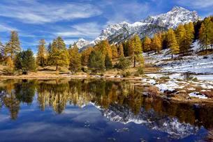 Snow-covered mountains and autumnal larch forest reflectedの写真素材 [FYI02340184]