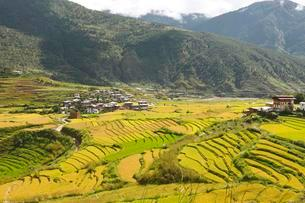 View of Lobesa and terraced rice fields, Punakha Districtの写真素材 [FYI02340282]