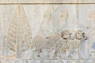 Ancient relief of the Achaemenids, Delegation of theの写真素材 [FYI02340290]